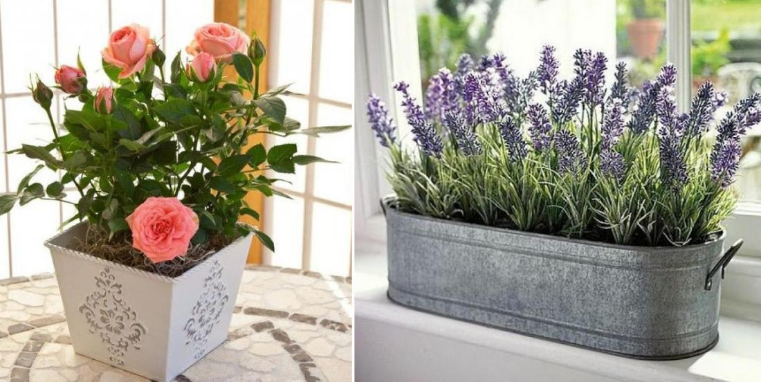 These 15 plants and flowers bring more positivity and happiness into your home