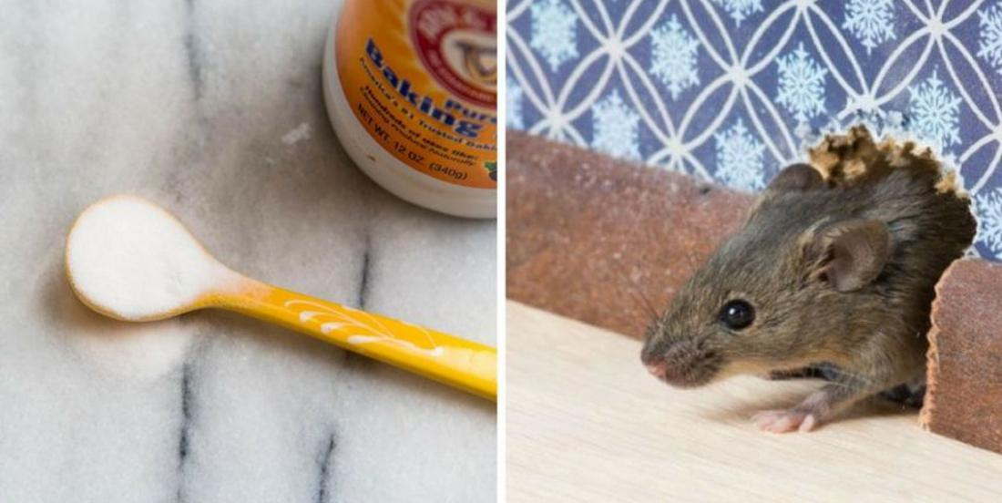 12 effective methods to keep rodents away from home