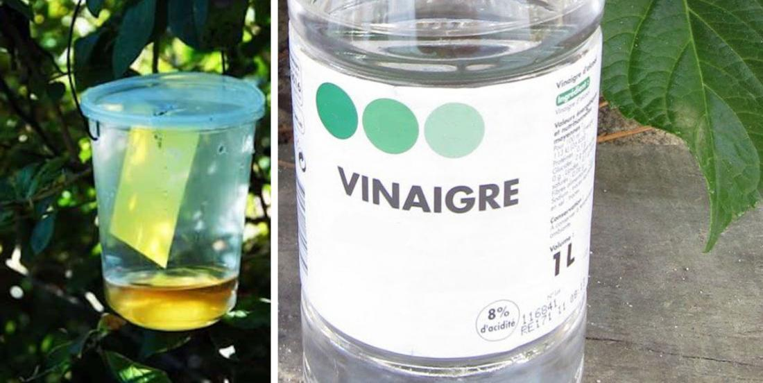 13 amazing things that vinegar will do in your garden and around the house