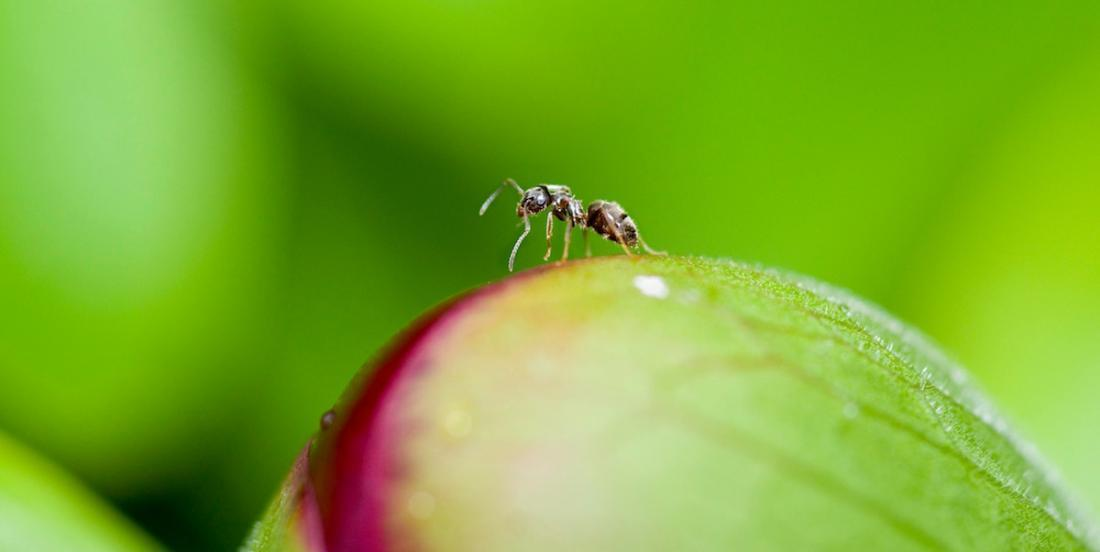 Here are the best 5 ways to keep ants away naturally