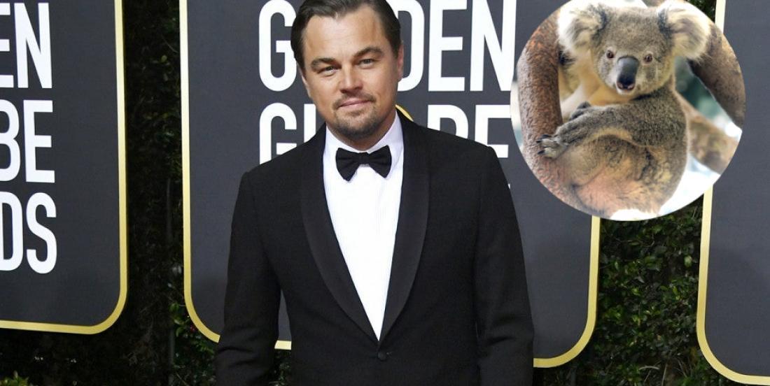 Famous actor Leonardo DiCaprio donated $3M towards the Australian bushfire appeal!