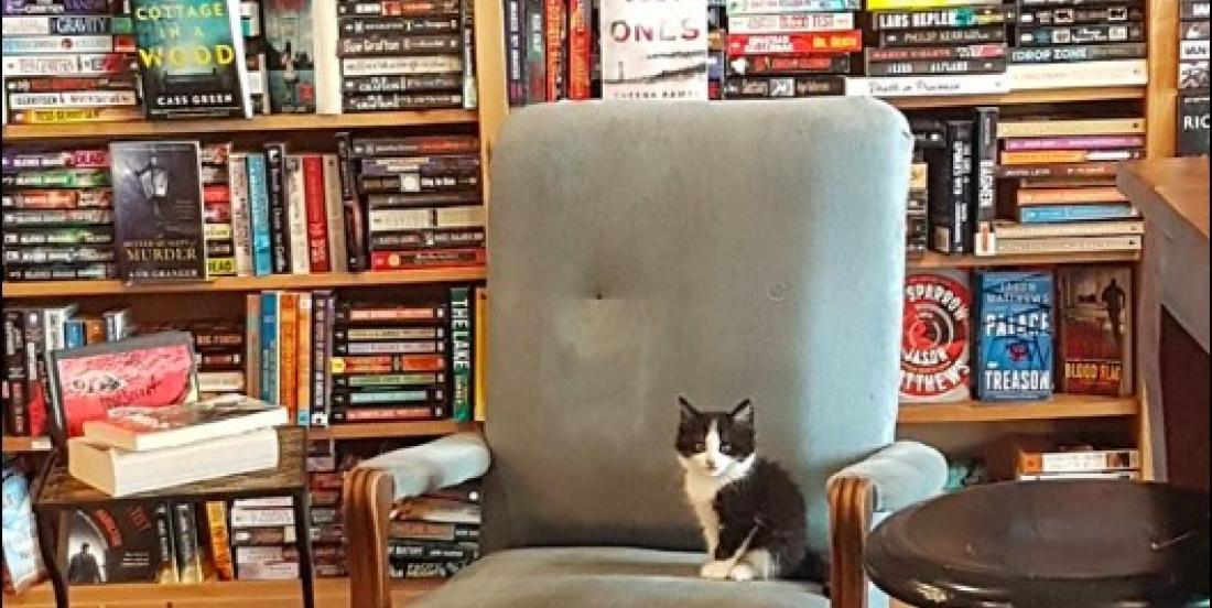 You can hang out and even adopt a kitten in this bookstore in Canada!