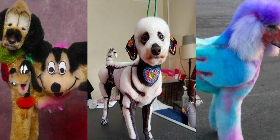25 dogs who may not want to return to the grooming salon!